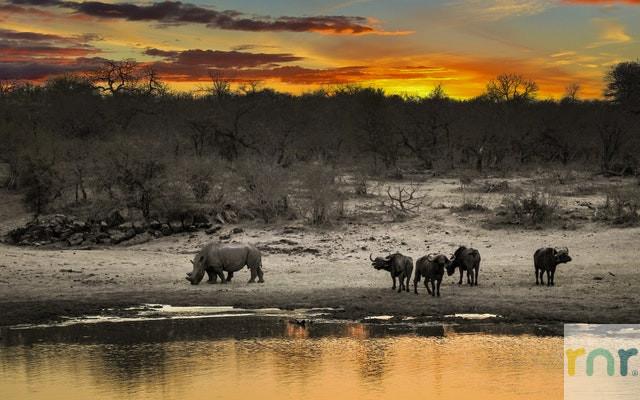 Mjejane accommodation safari