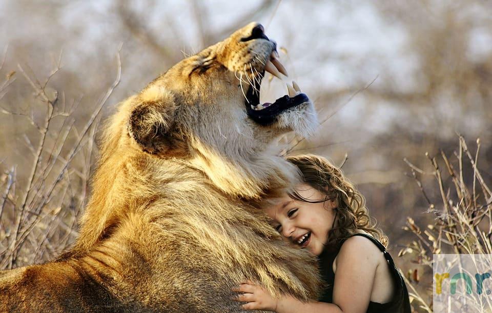 Zebula-Accommodation-Lion